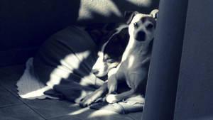 Laika and her partner: Hanna