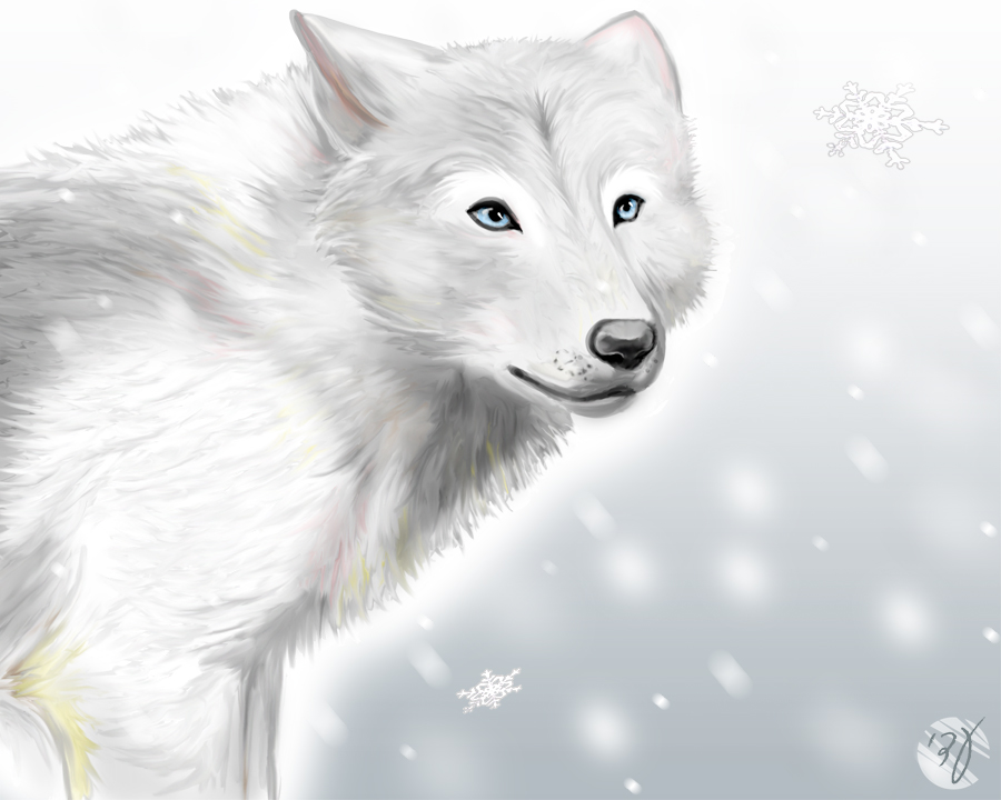 pin white wolf pups with blue eyes wolves photo 7570934