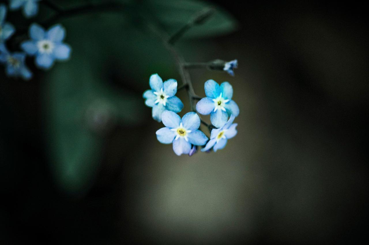 Wild Flowers by toddyost