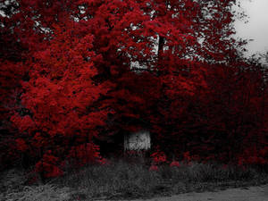 The Shed Under Red