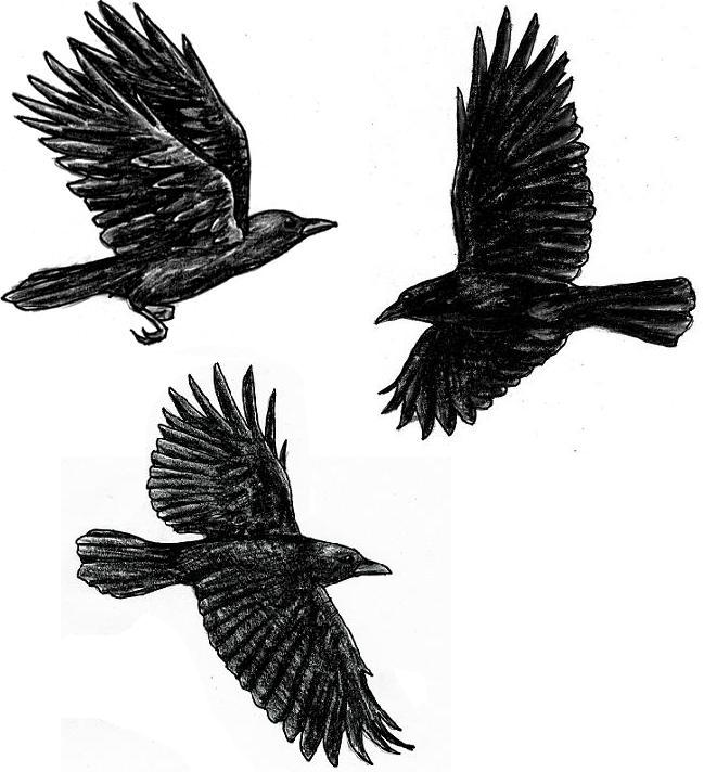 flying crow flash by rottenalice on deviantart