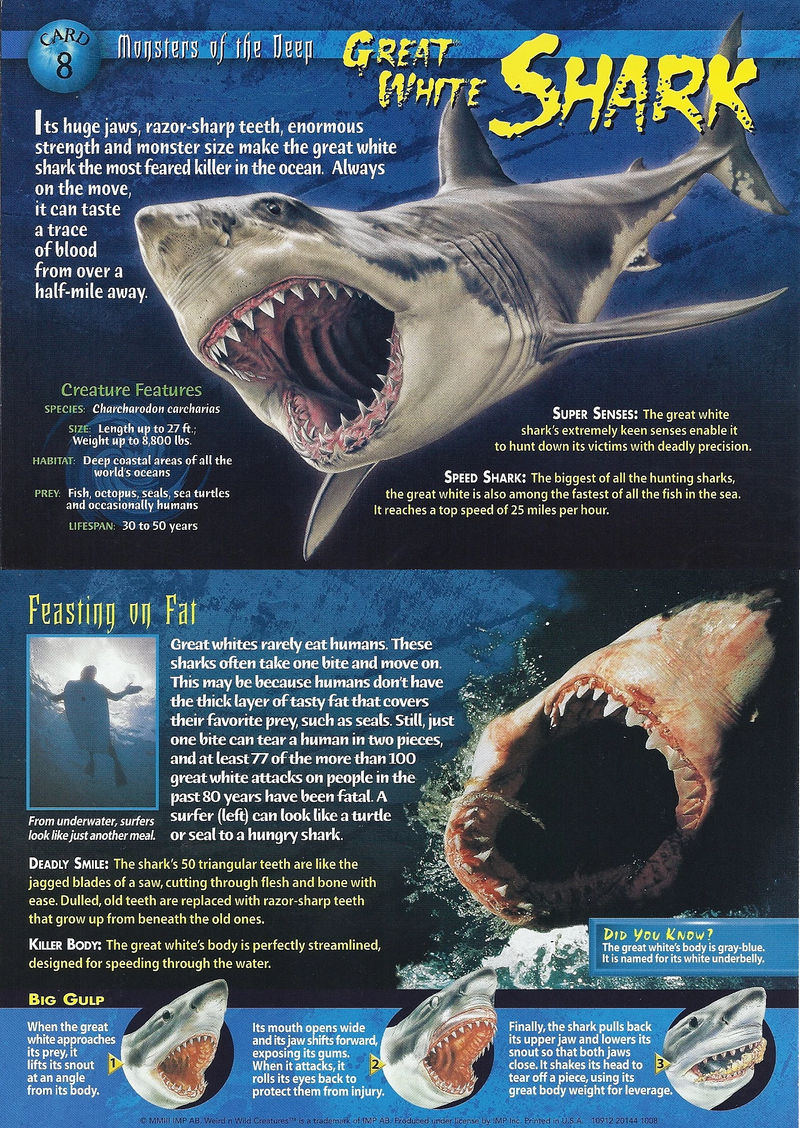 WNWC Great White Shark by nickthetrex on DeviantArt