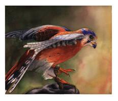 The Falconer by BigNtasty