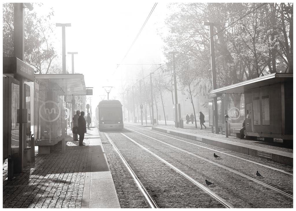Misty Morning by JoseMelim
