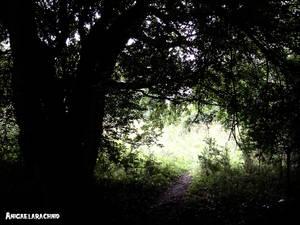 Light breaks through dark.