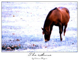 The Horse by sterlingsilver