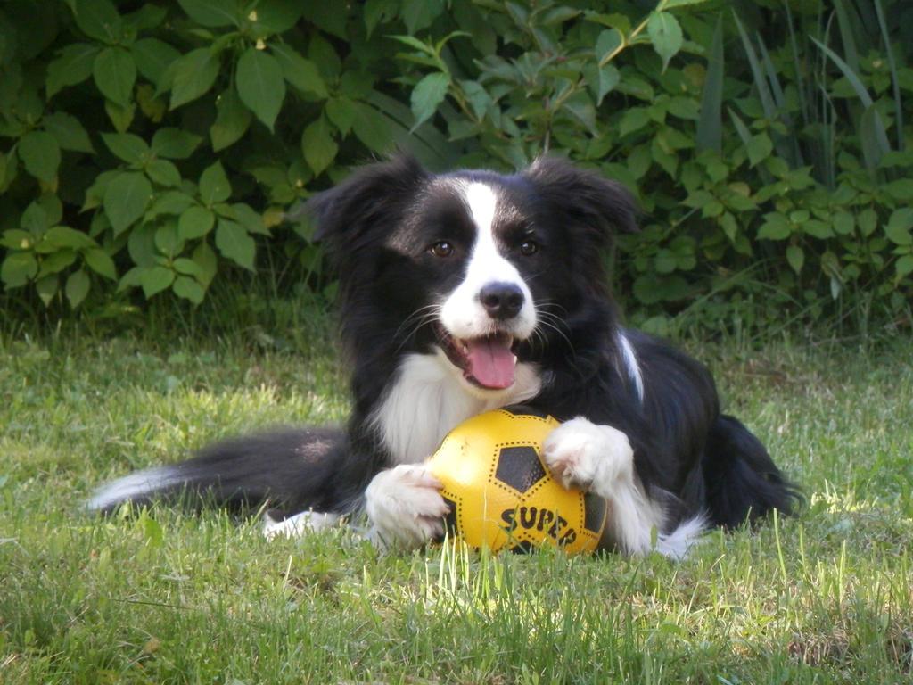 A very happy dog by faithandfreedom on deviantART