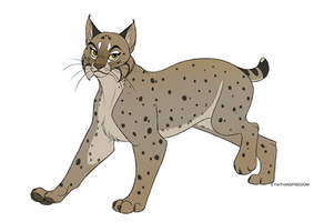 Bobcat by faithandfreedom