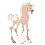 Appaloosa Palomino Foal