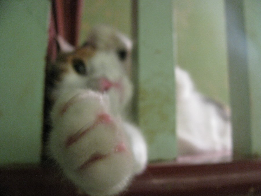 Come Closer by MiniatureBaker