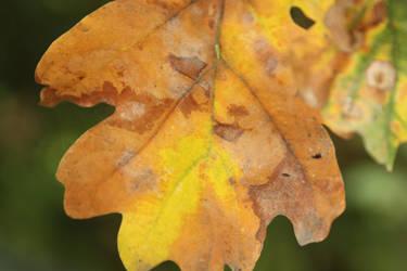 October Rust I by arimeq