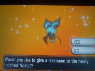 Shiny Noibat by Blazibaby