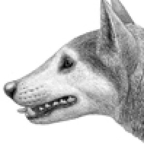 Cynarctus's Profile Picture
