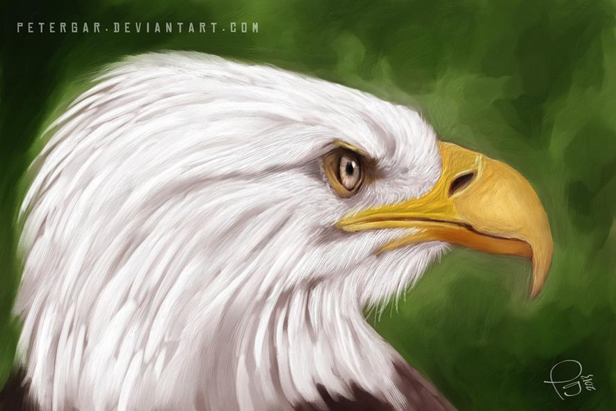 Aguila 6 2013 | Consejos De Fotografía