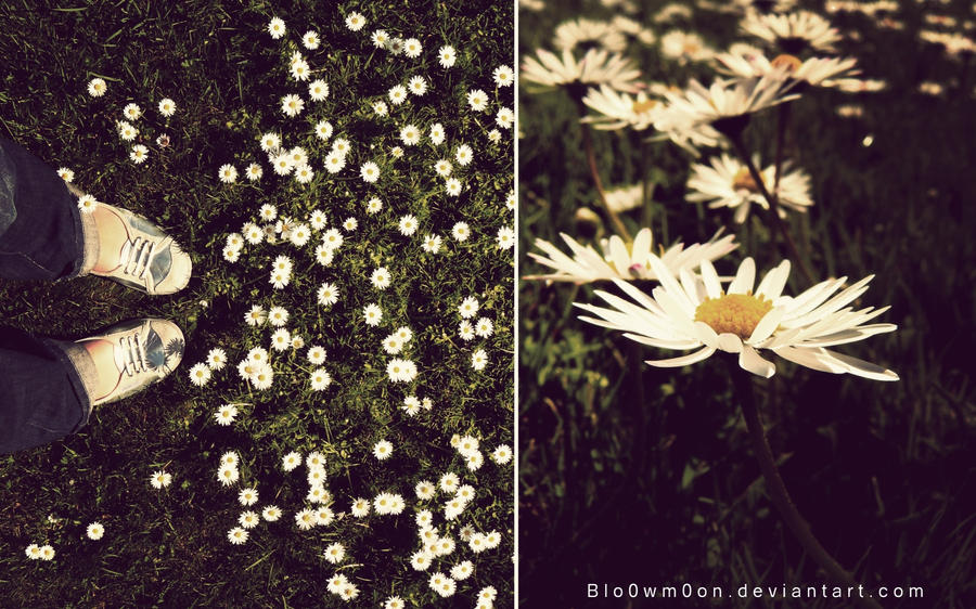 Daisies by Blo0wm0on