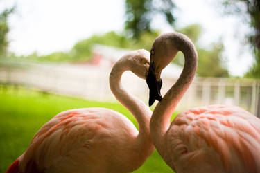 Flamingo Heart by Victore-1