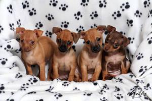 Puppies by lexusprincess