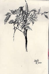Still life in pen and ink