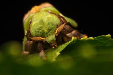 Green Moth (finally posed) :) by Kisarisary