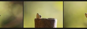 Torn between Compositions (gecko)