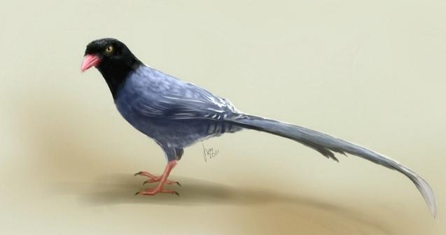 Blue Magpie by joscat