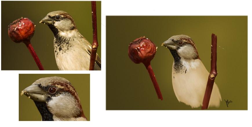 Sparrow by joscat