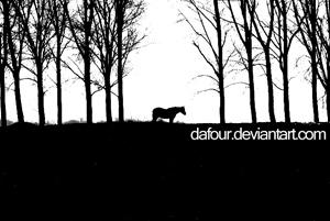 dafour's Profile Picture