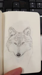 Sketch-a-day #26 - Wolf