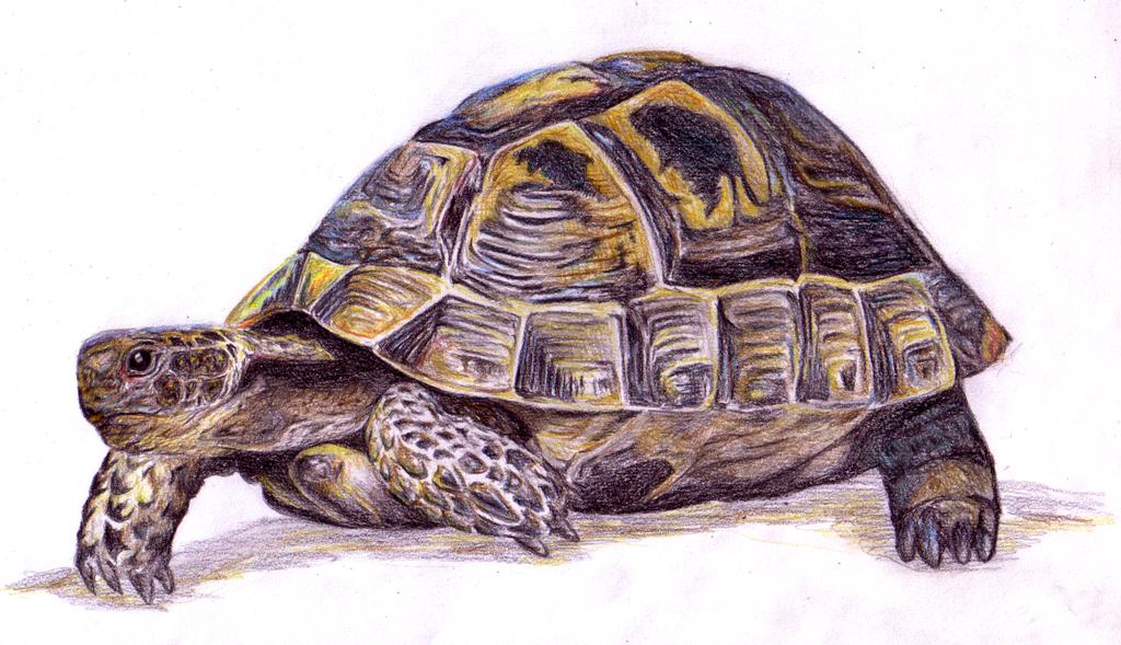 Schildkröte by Shinti