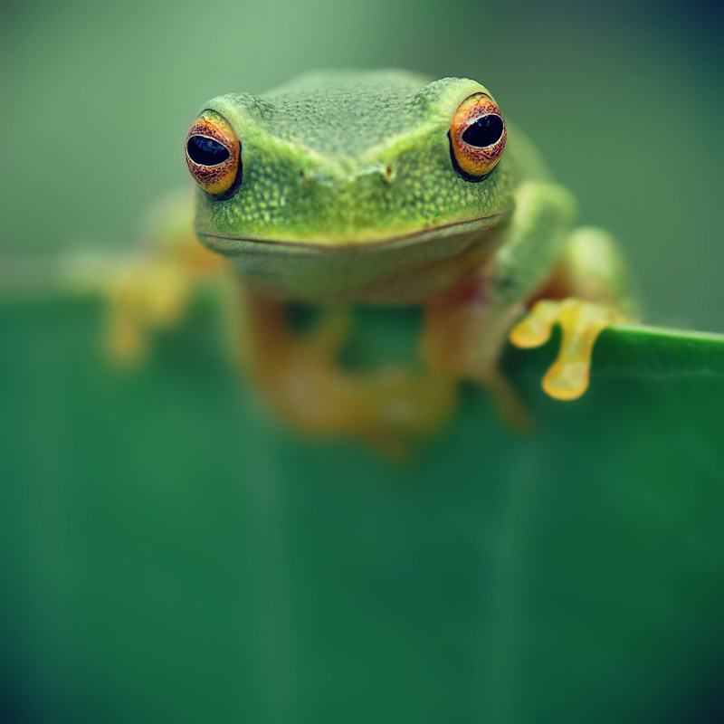 Tree frog by downpoured
