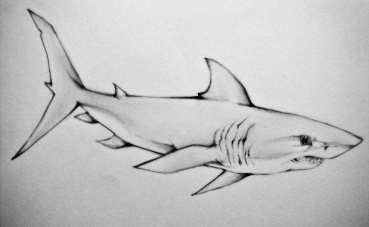 Mako Shark by p...