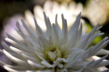 Flower by Sundram