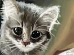 59 cat