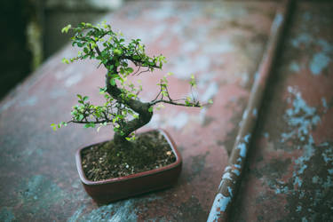Bonsai by Shreeb