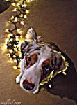 Indy my cutie pie by Minkleaf