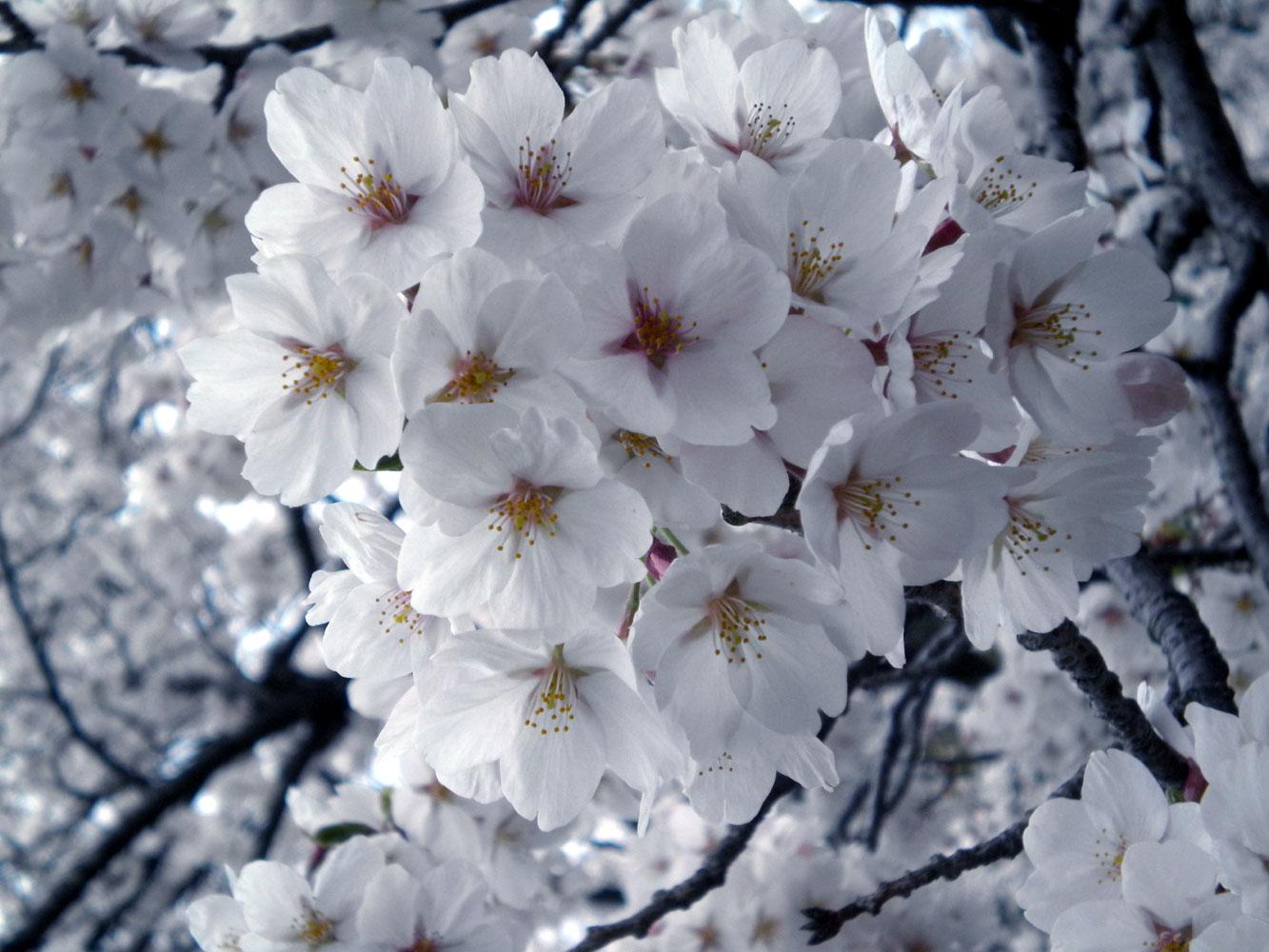 Bloom by Yori-kunn
