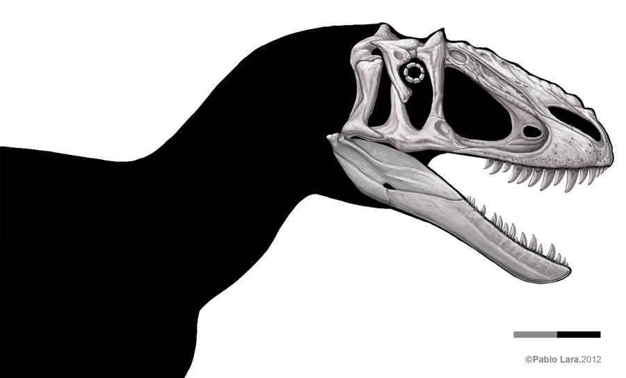 Yutyrannus shaded skull by pabluratops