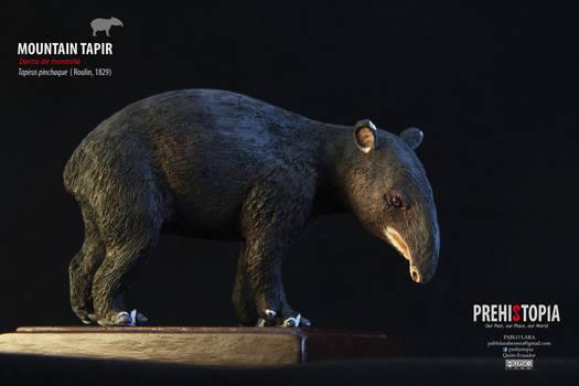 Mountain Tapir - Tapir Andino