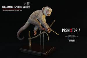 Ecuadorian capuchin monkey - Mono Machin