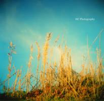 My Winter by LithiumFlowerx