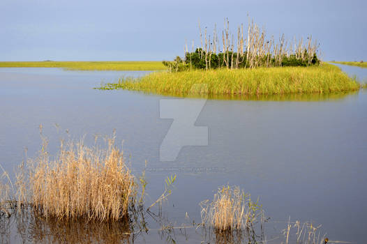 Everglades Oasis