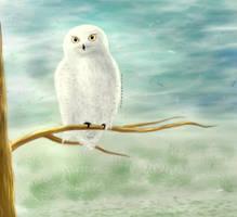 Owl by gilbert235