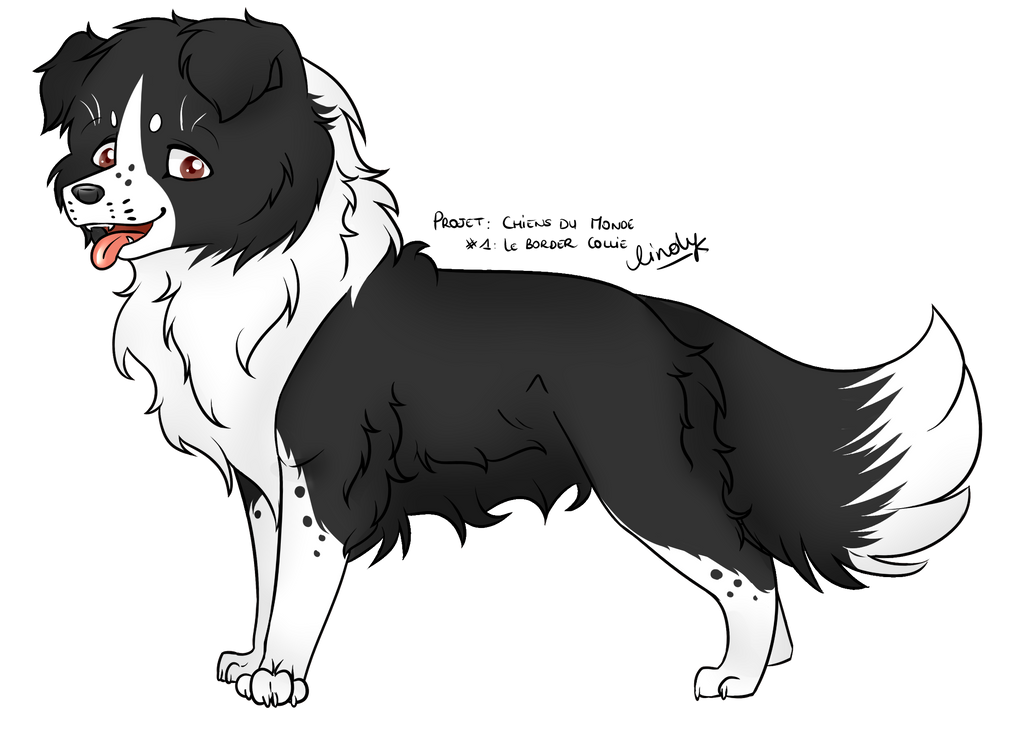 Project : World's Dogs #1 The Border Collie by Pillonchou