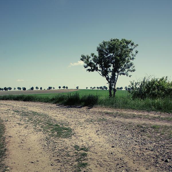 Path by brabikate
