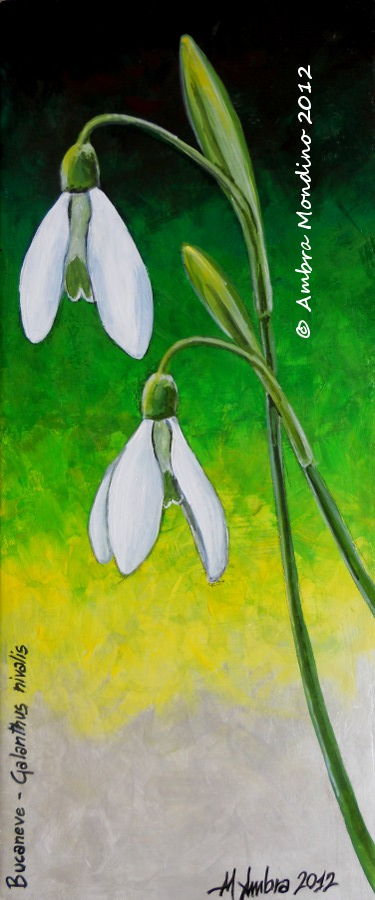 Common snowdrop by flysch