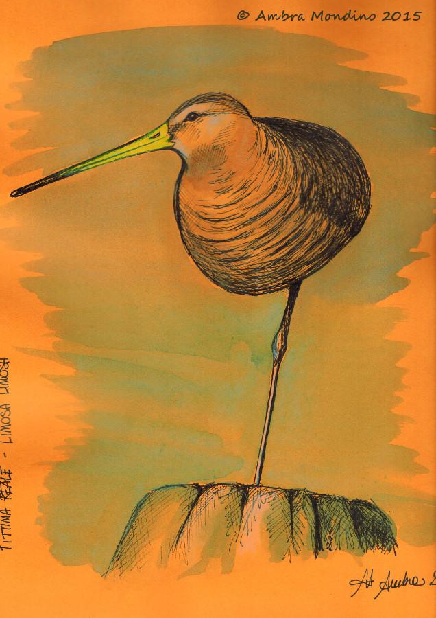 Black tailed godwit by flysch