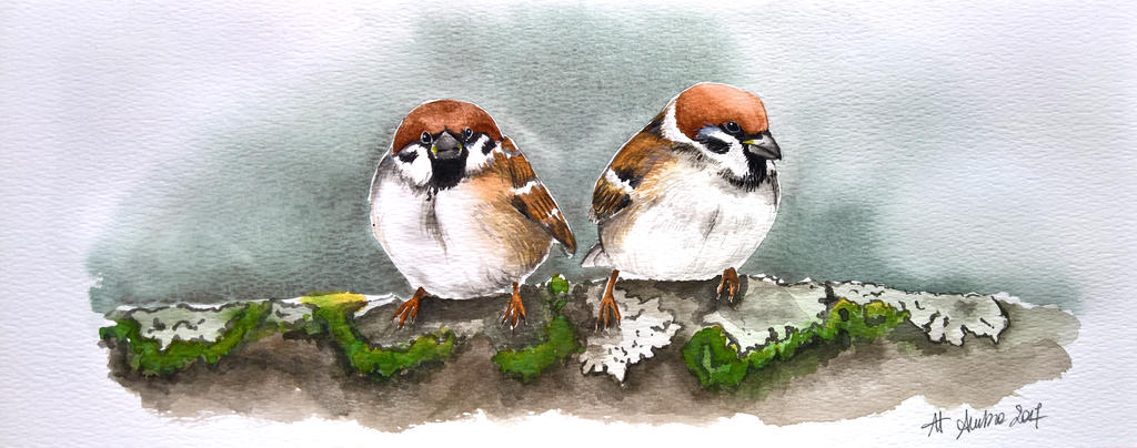 Mountain sparrows by flysch