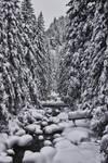 Winter Mountains XVI
