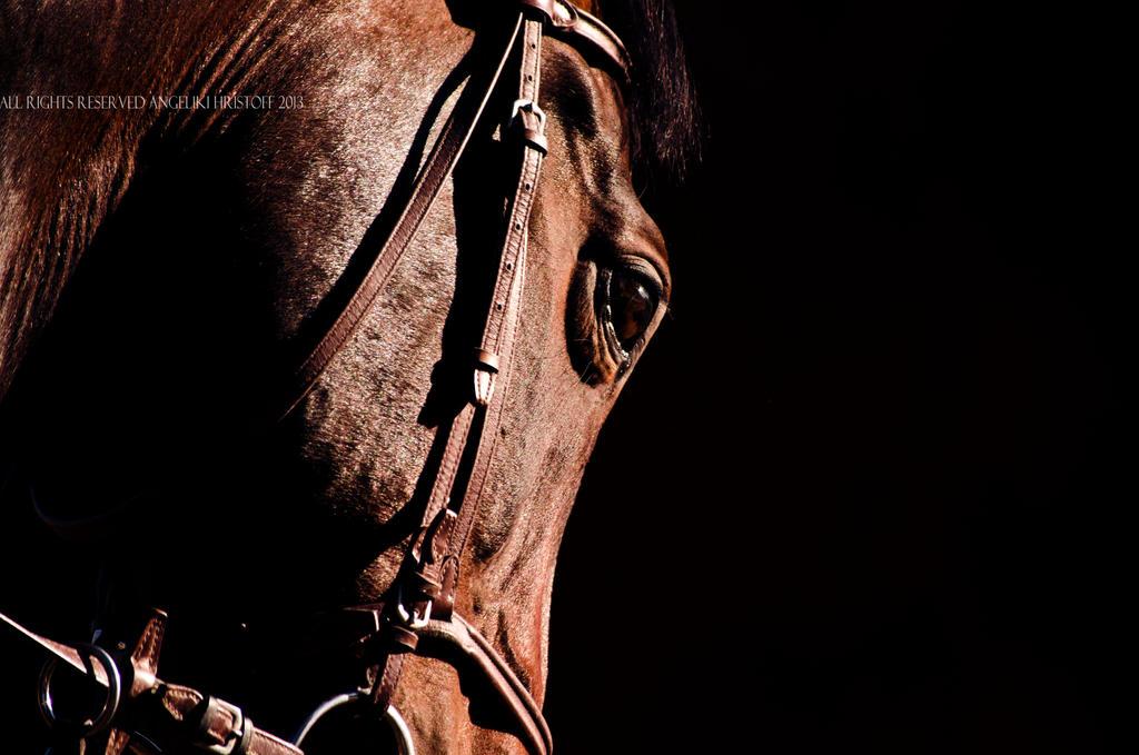 Equestrian by averel-a