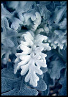 winter flower by ssilence